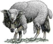 0b6adc27c8ddf7caef79b2563d675a0e--sheep-wolf